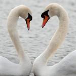 Week-in-wildlife-A-pair-o-009